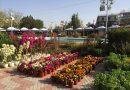 Η Γιορτή των Λουλουδιών στην Ηλιούπολη