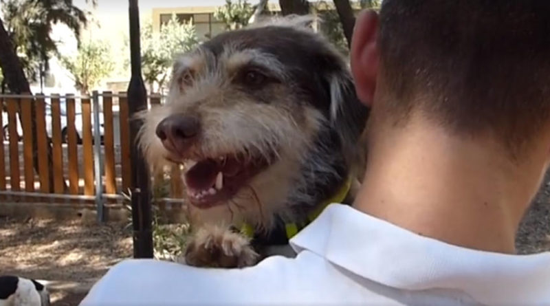Δωρεάν μαύρες σκύλες βίντεο