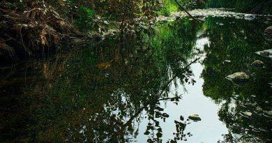 Aνακαλύψτε το ρέμα της Πικροδάφνης