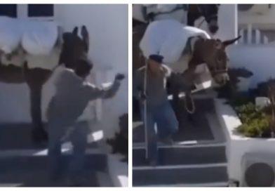 Νέο εξοργιστικό βίντεο με κακοποίηση γαϊδουριού στη Σαντορίνη