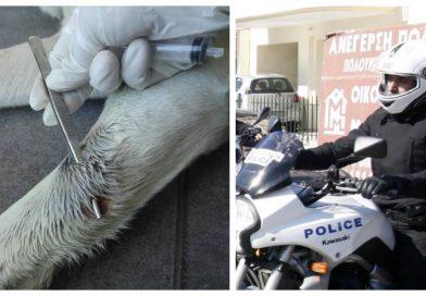 Αστυνομικός πυροβόλησε σκύλο γιατί του γάβγισε