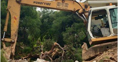 Boυλιαγμένη: Μπουλντόζα ξεριζώνει ανελέητα όλα τα πεύκα από οικόπεδο