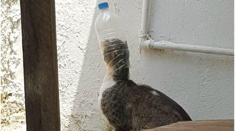 Κτηνωδία στη Βουλιαγμένη: Σφήνωσαν μπουκάλι στο κεφάλι γάτου