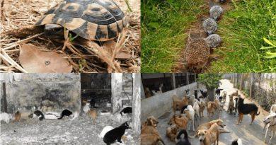 Συνάντηση για τα ζώα στο πρώην αεροδρόμιο του Ελληνικού